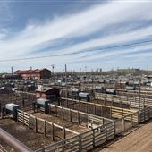 Oklahoma National Stockyard Exchange